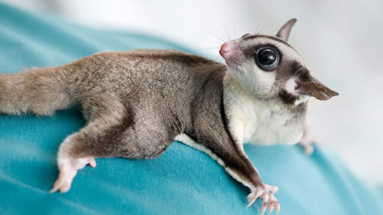 exoticpets4sale.com